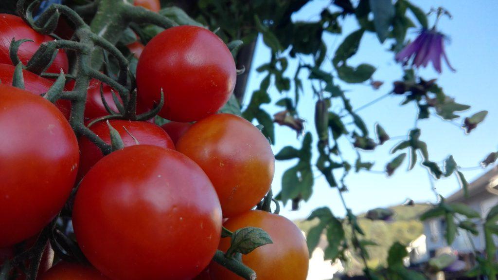 Vorträge zu den Themen Gemüse und Obstbäume im Garten